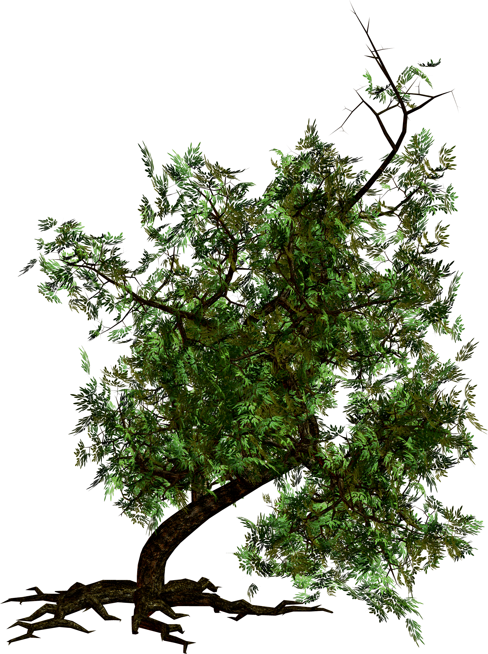 Crooked Tree PNG Image