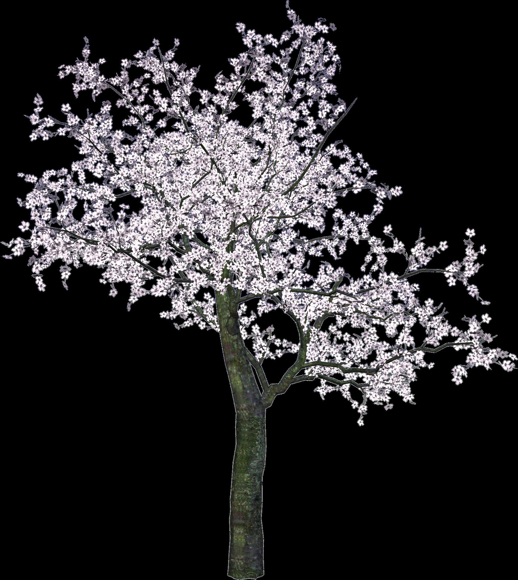 Spring Tree PNG Image