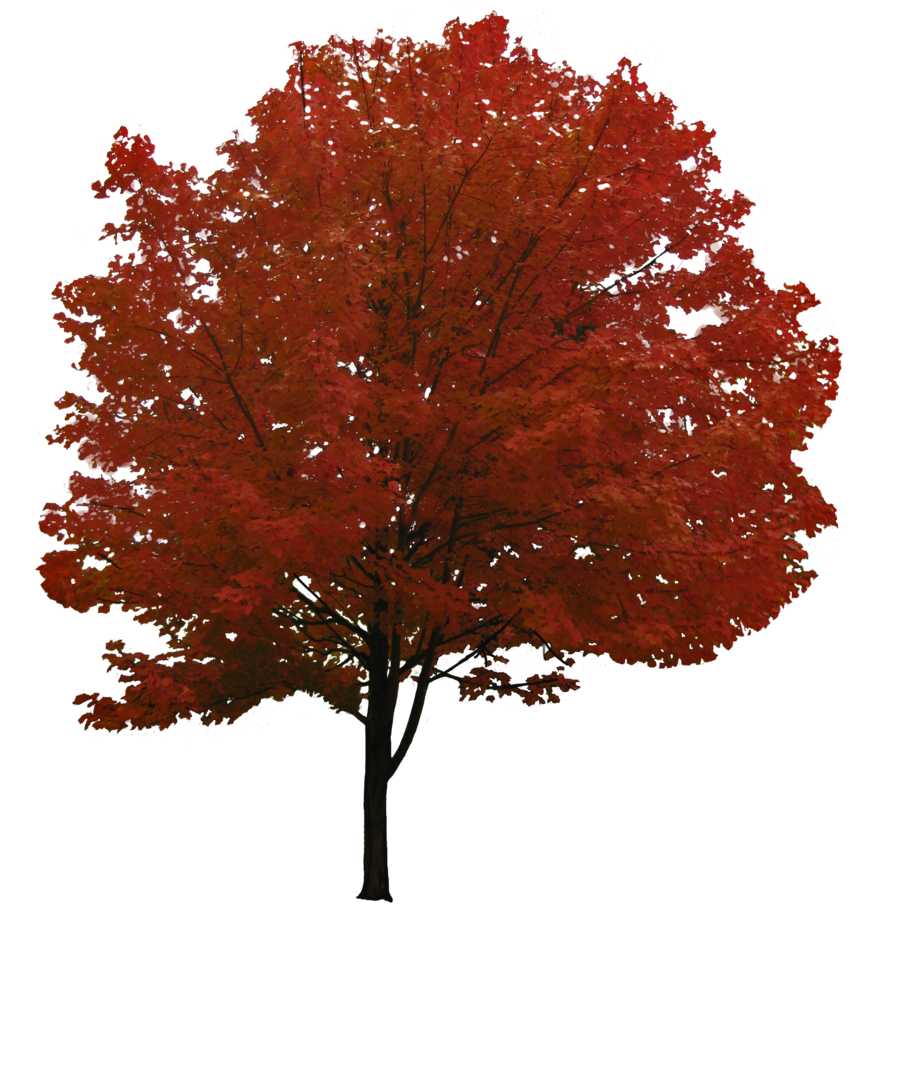Tree Autumn PNG Image