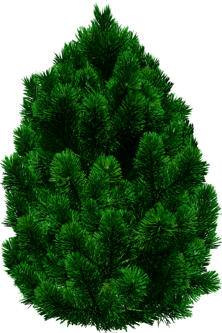 Fir Tree Large PNG Image