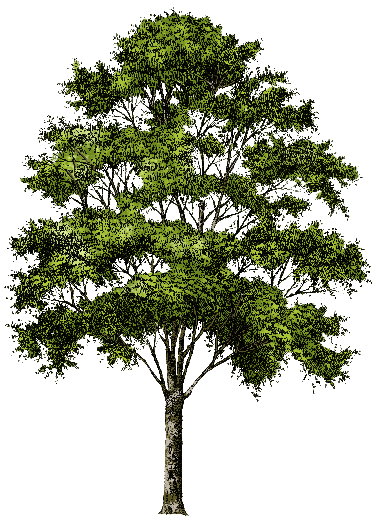 Branches Tree Natural PNG Image