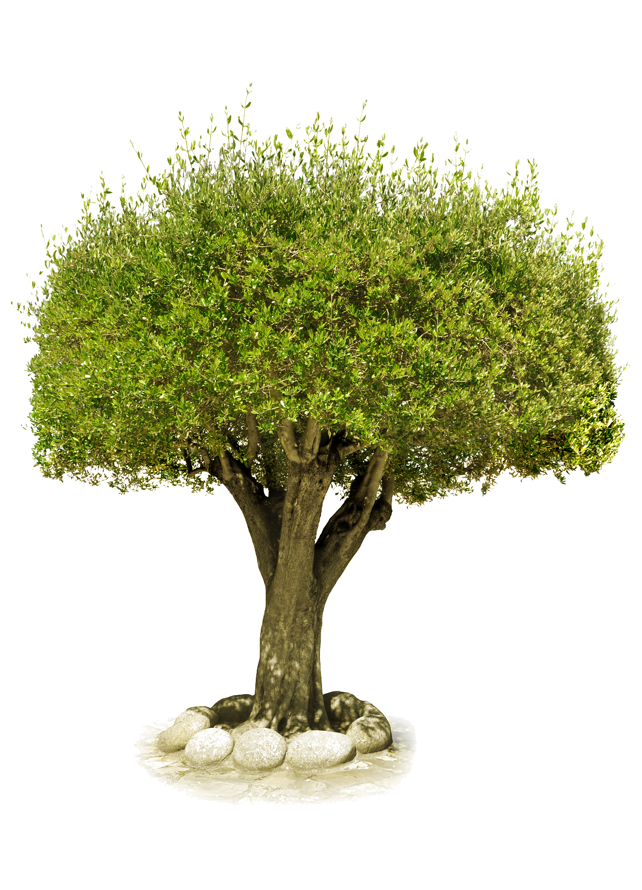 Wood Tree with Stones PNG Image