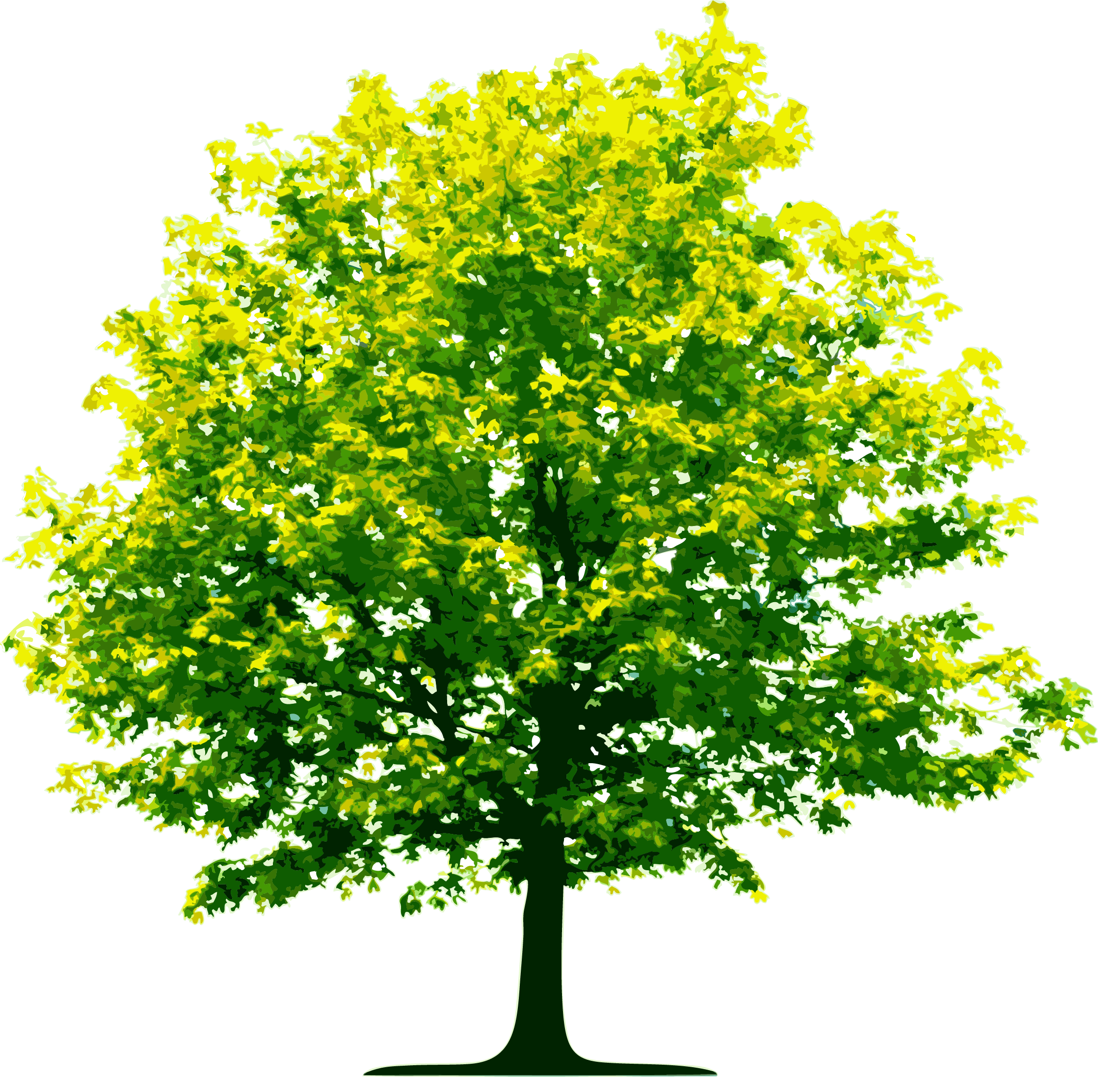 Tall Green Tree PNG Image