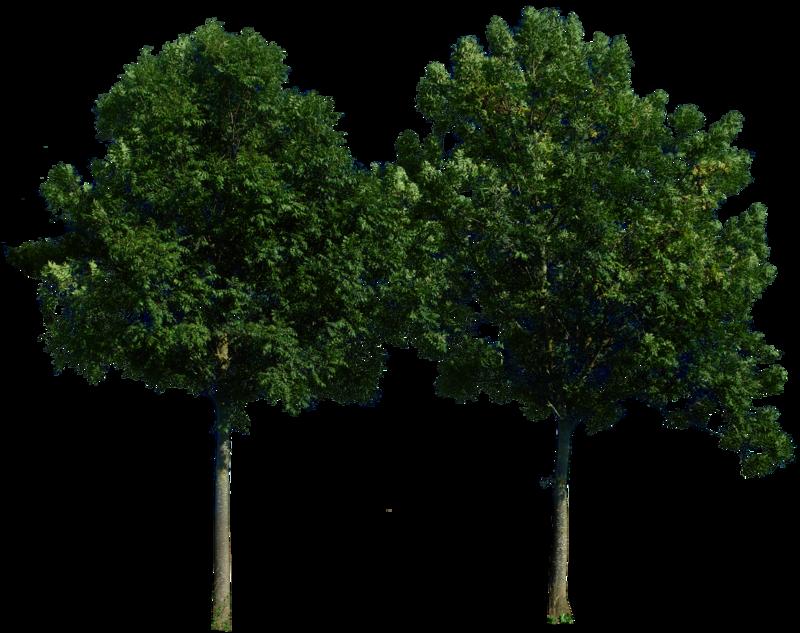 Large Wood Tree PNG Image