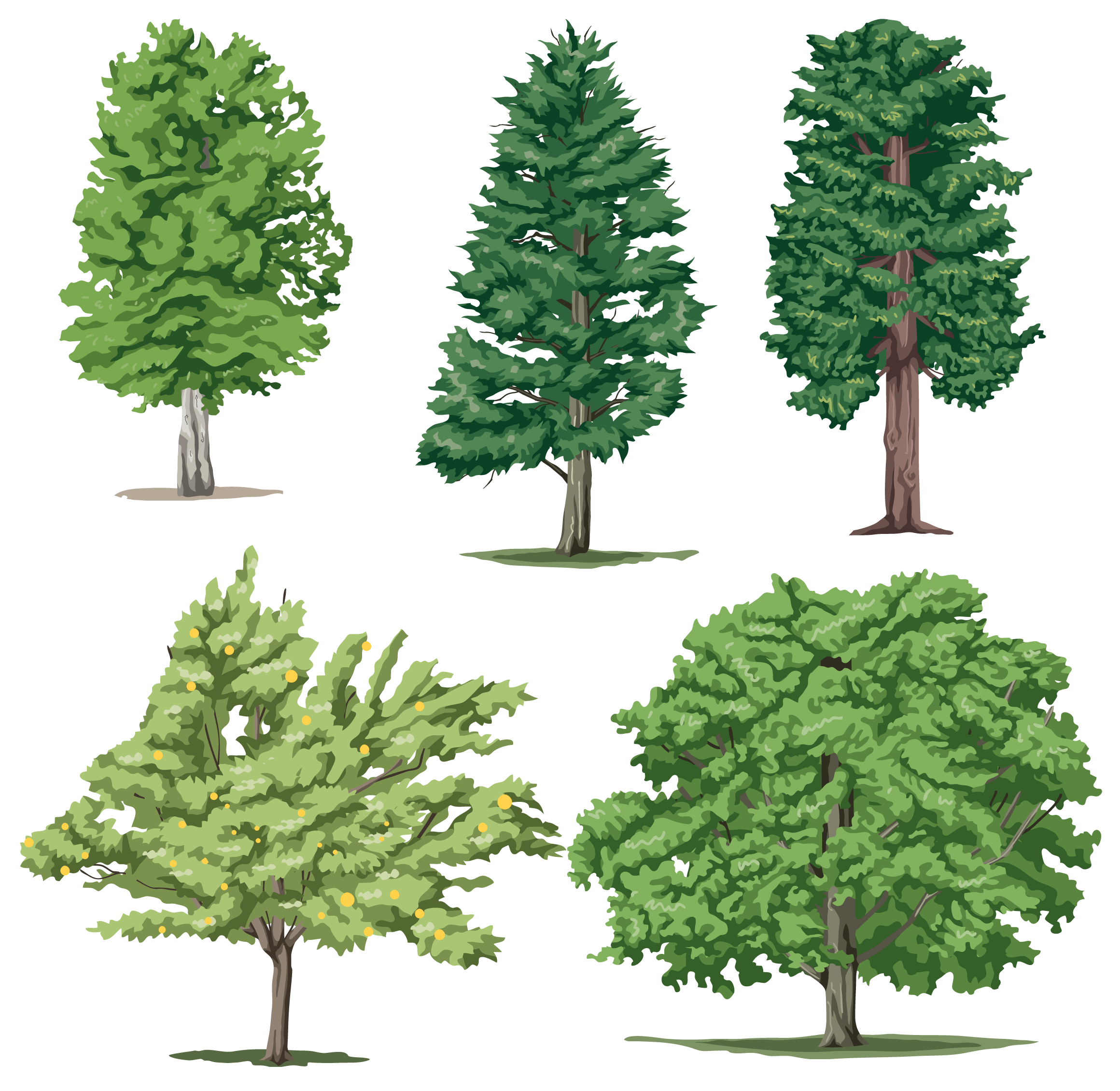 Leafy Tree Collection PNG Image