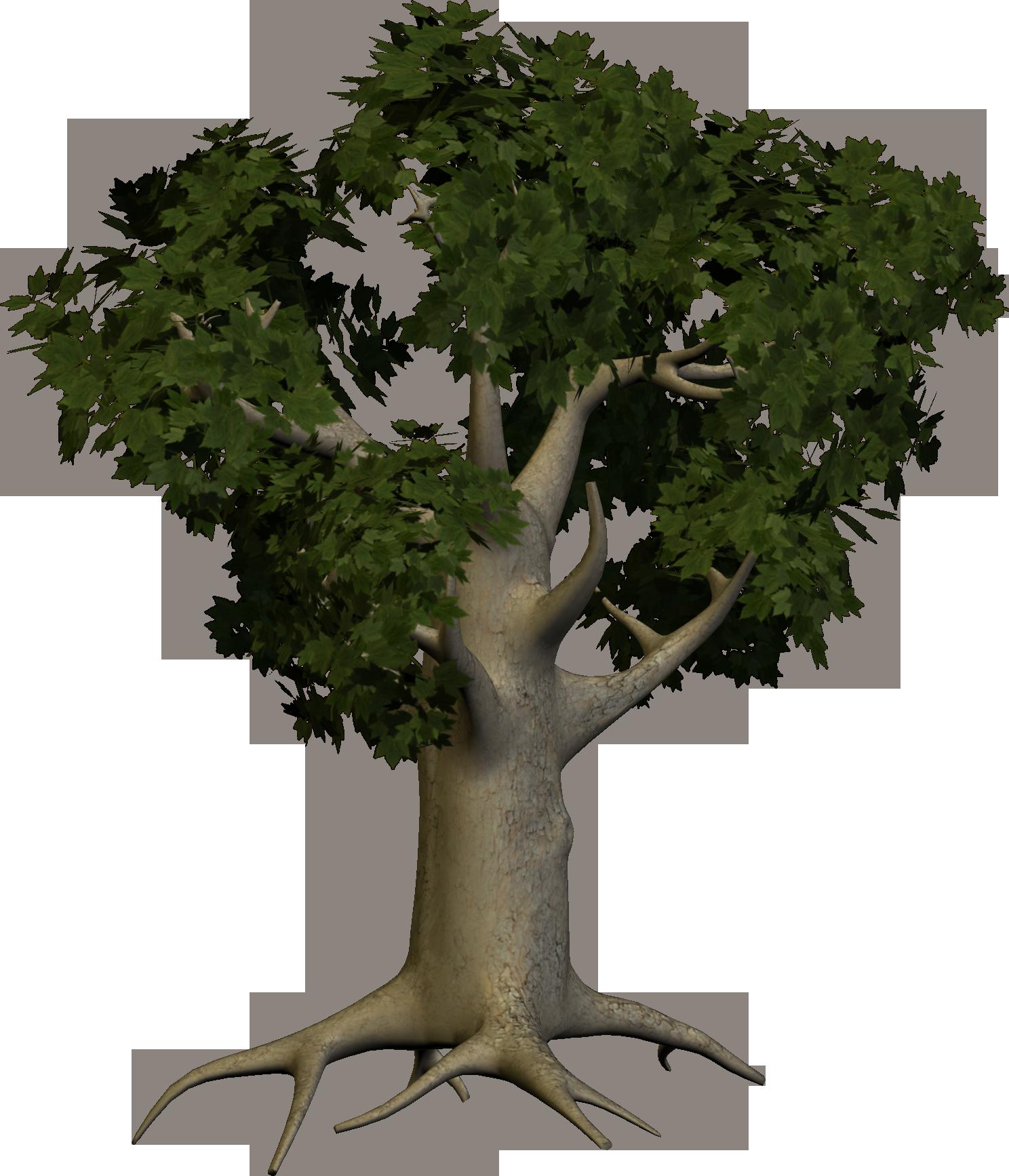 Oak Wood Tree PNG Image