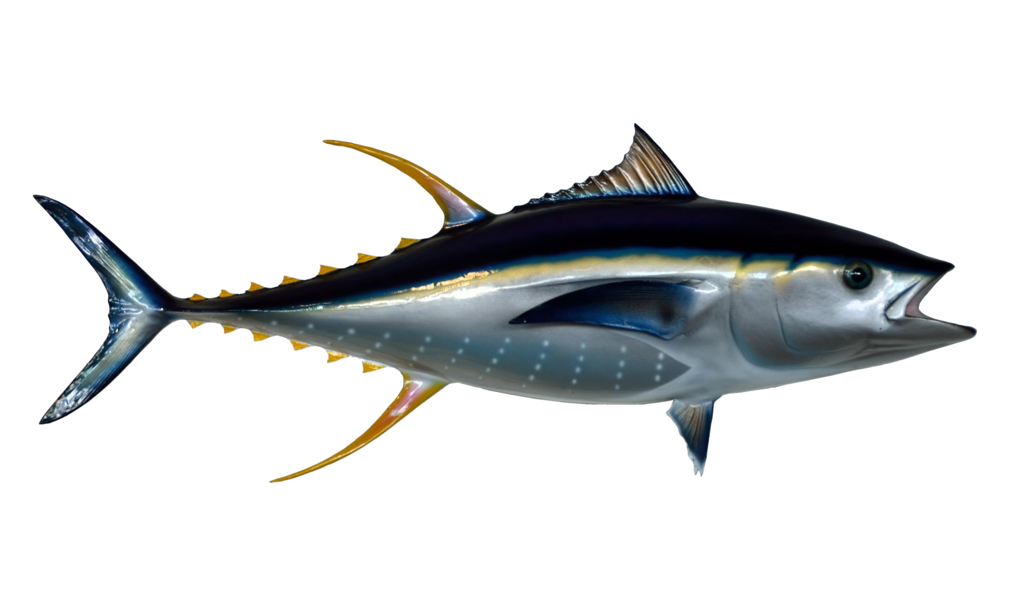 Tuna Fish Png Image Purepng Free Transparent Cc0 Png