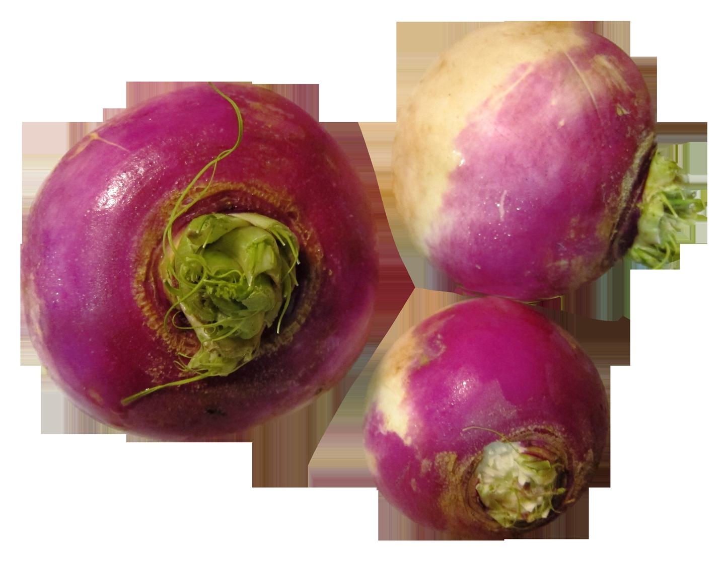 Turnip PNG Image