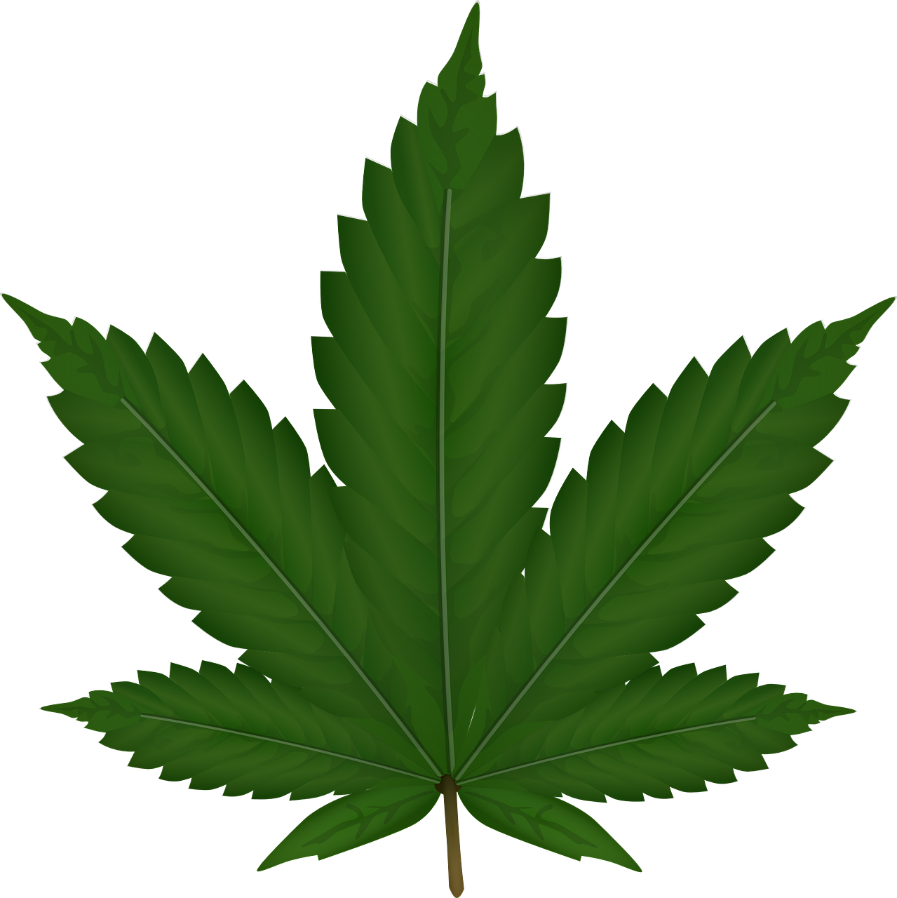 Weed Plant