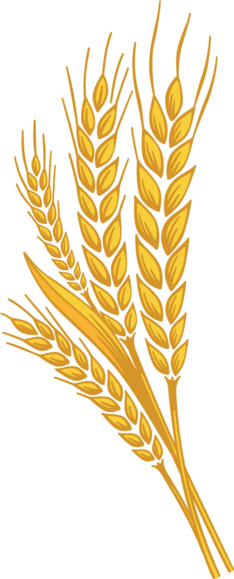 wheat png image purepng free transparent cc0 png image library
