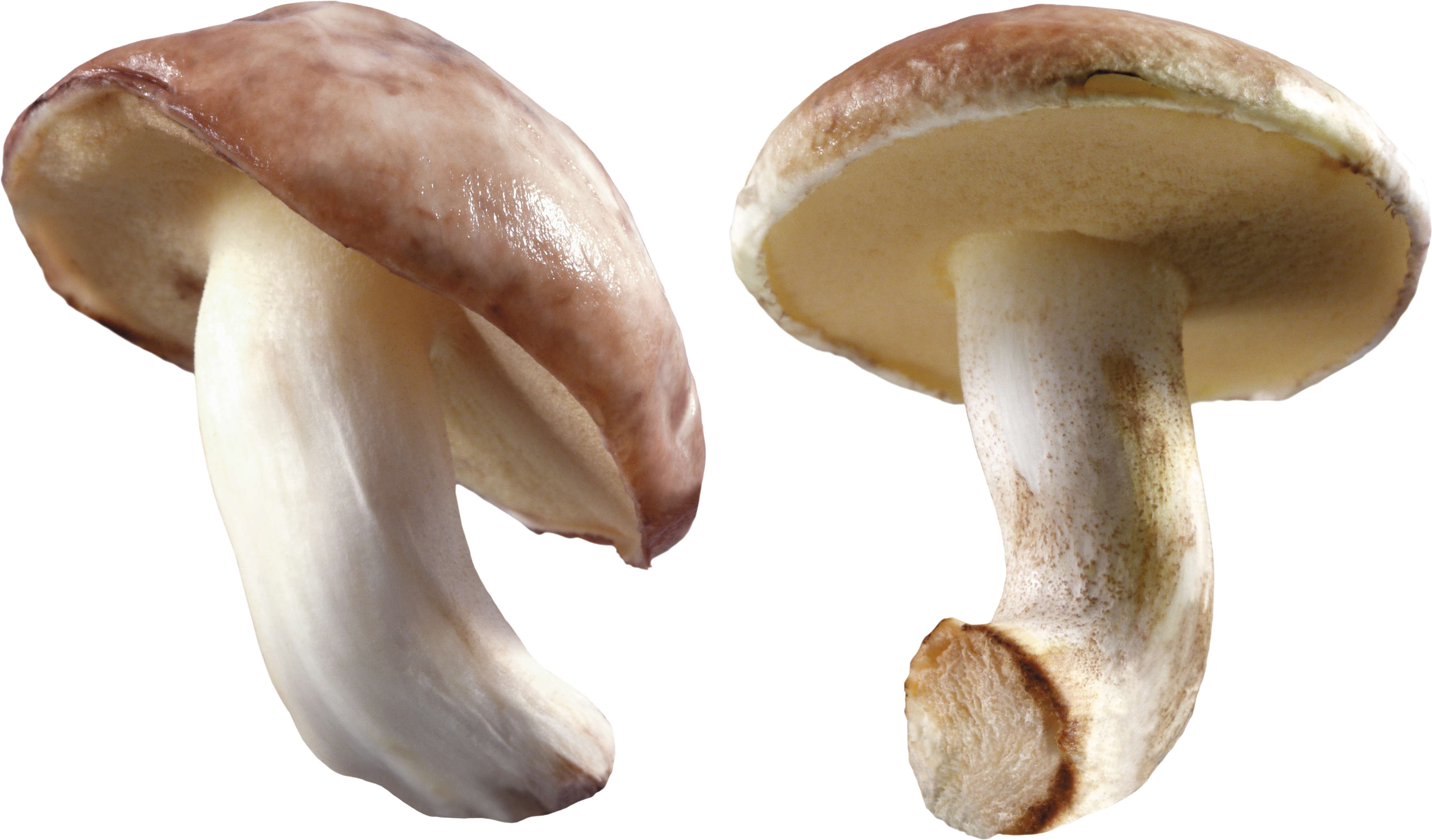 White Mushroom PNG Image