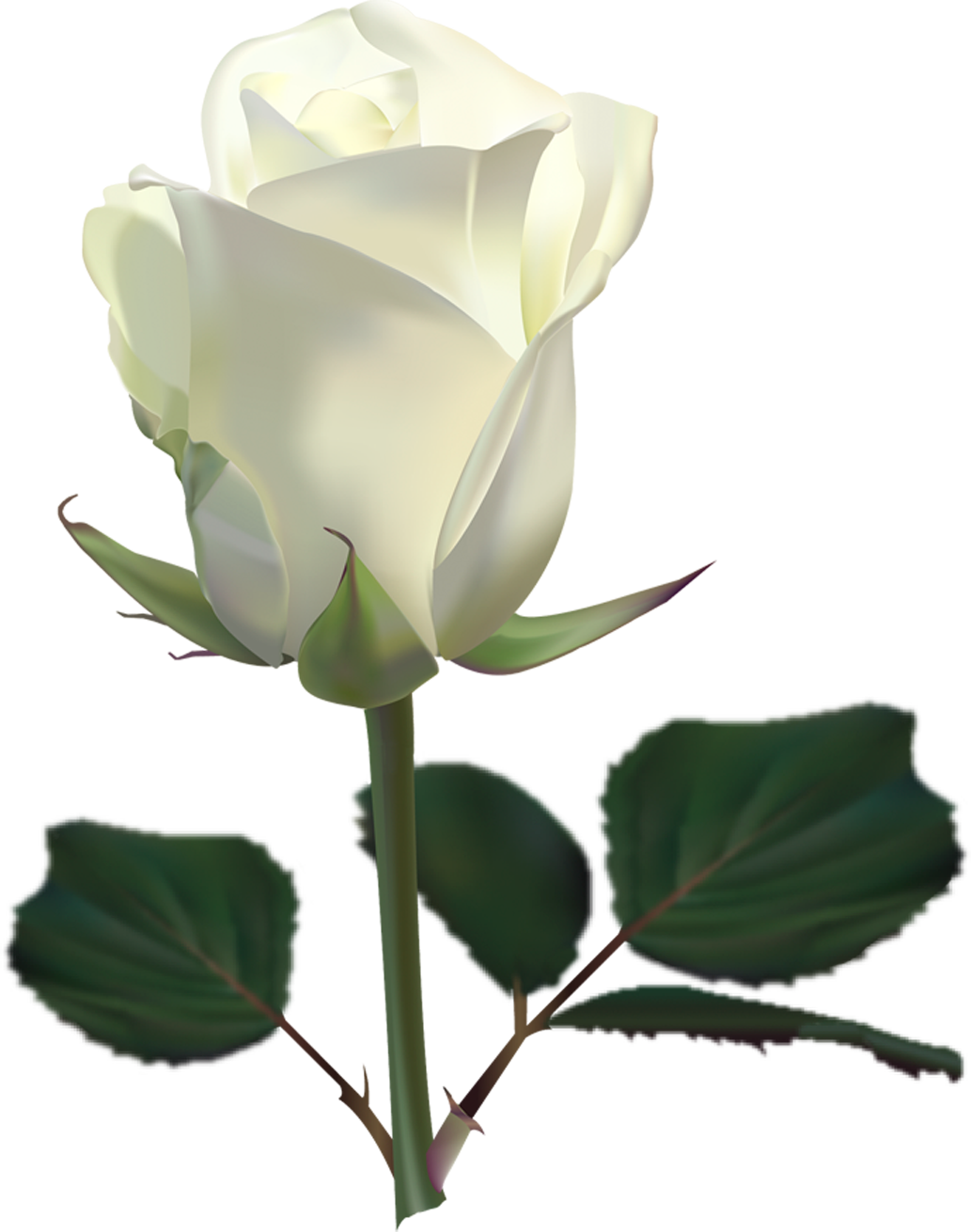 White roses png image purepng free transparent cc0 png image library mightylinksfo