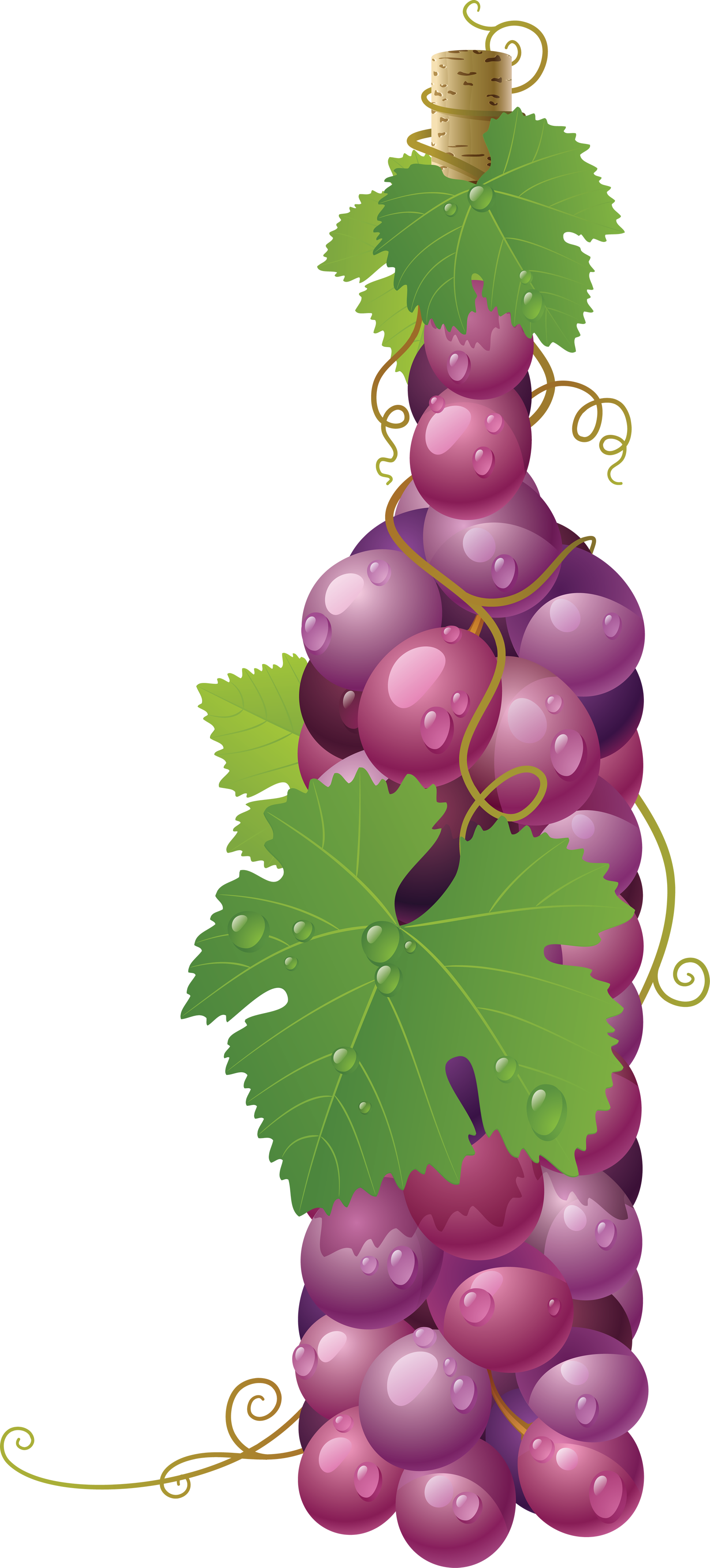 Winebottle out of Grapes PNG Image