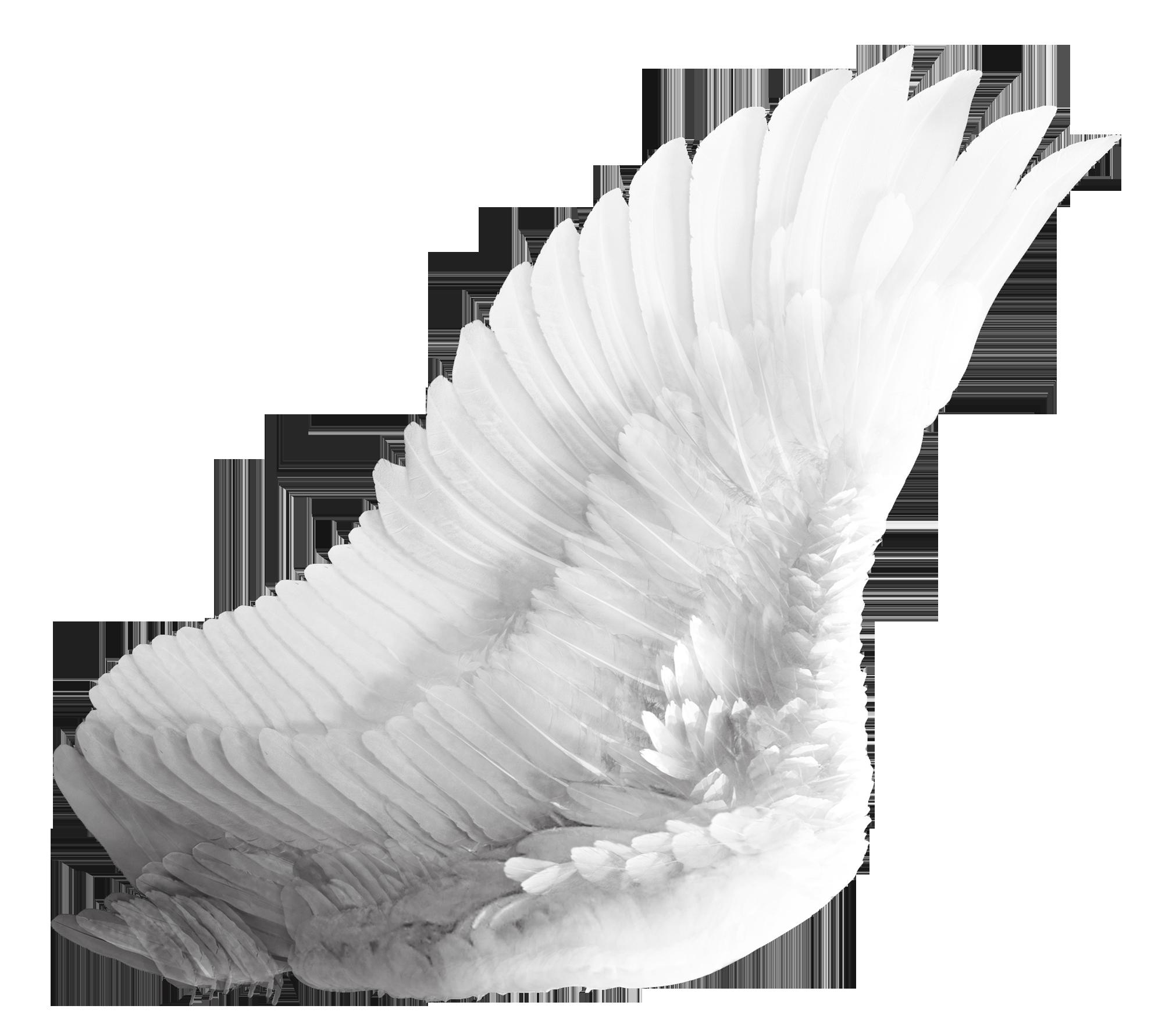 Wings White