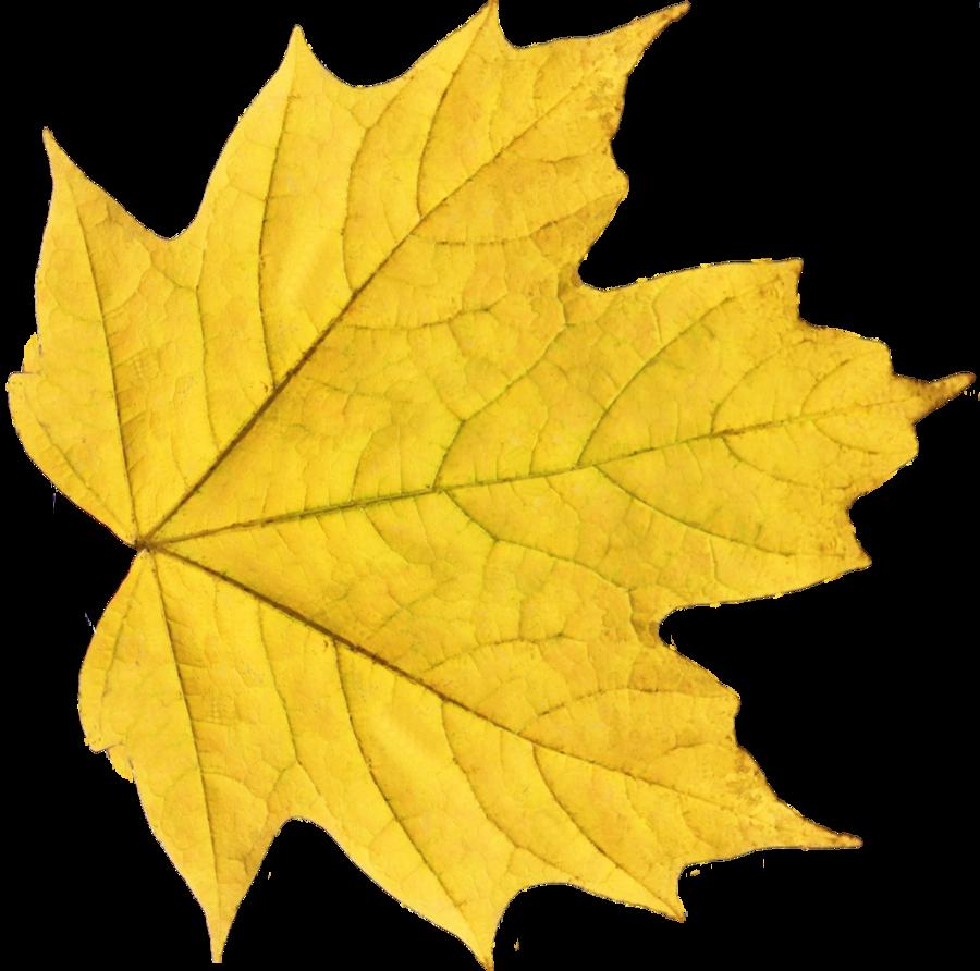 Yellow Leaf PNG Image - PurePNG | Free transparent CC0 PNG ...