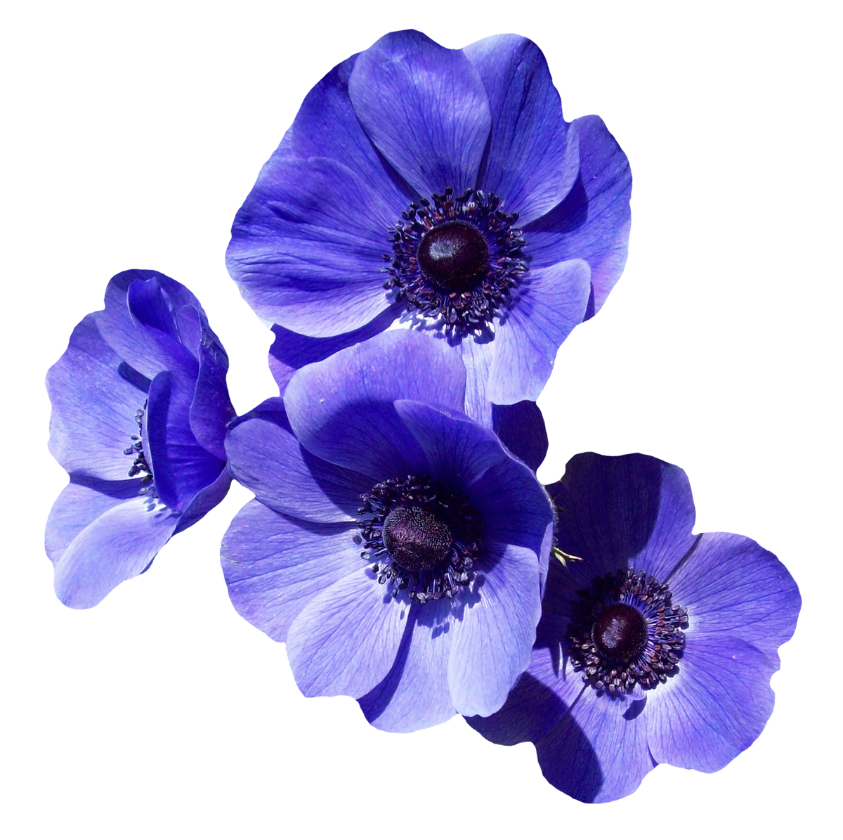 Purple Flowers PNG Image