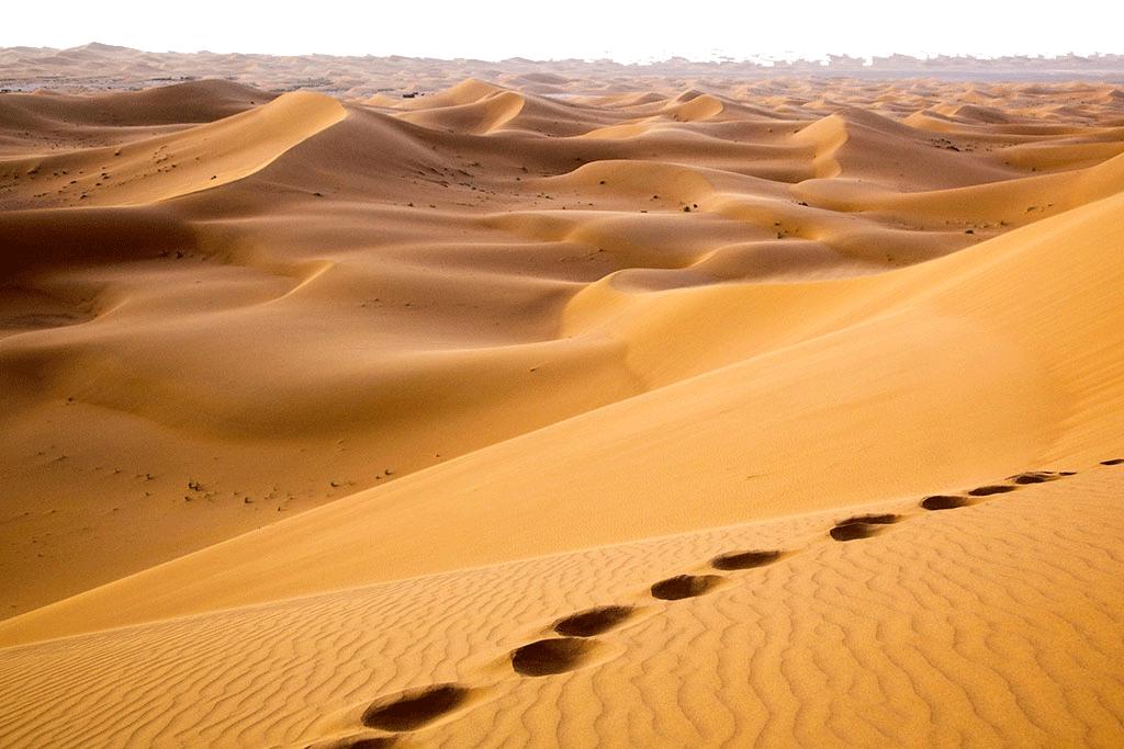 Hoof Prints in the Desert PNG Image