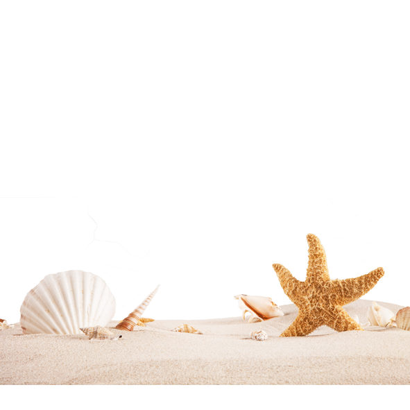 Sea Shells and Star Fish PNG Image