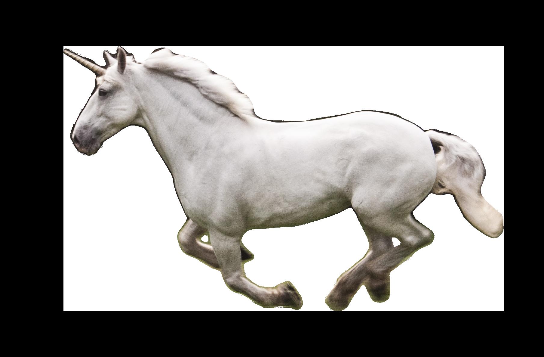Unicorno PNG Image