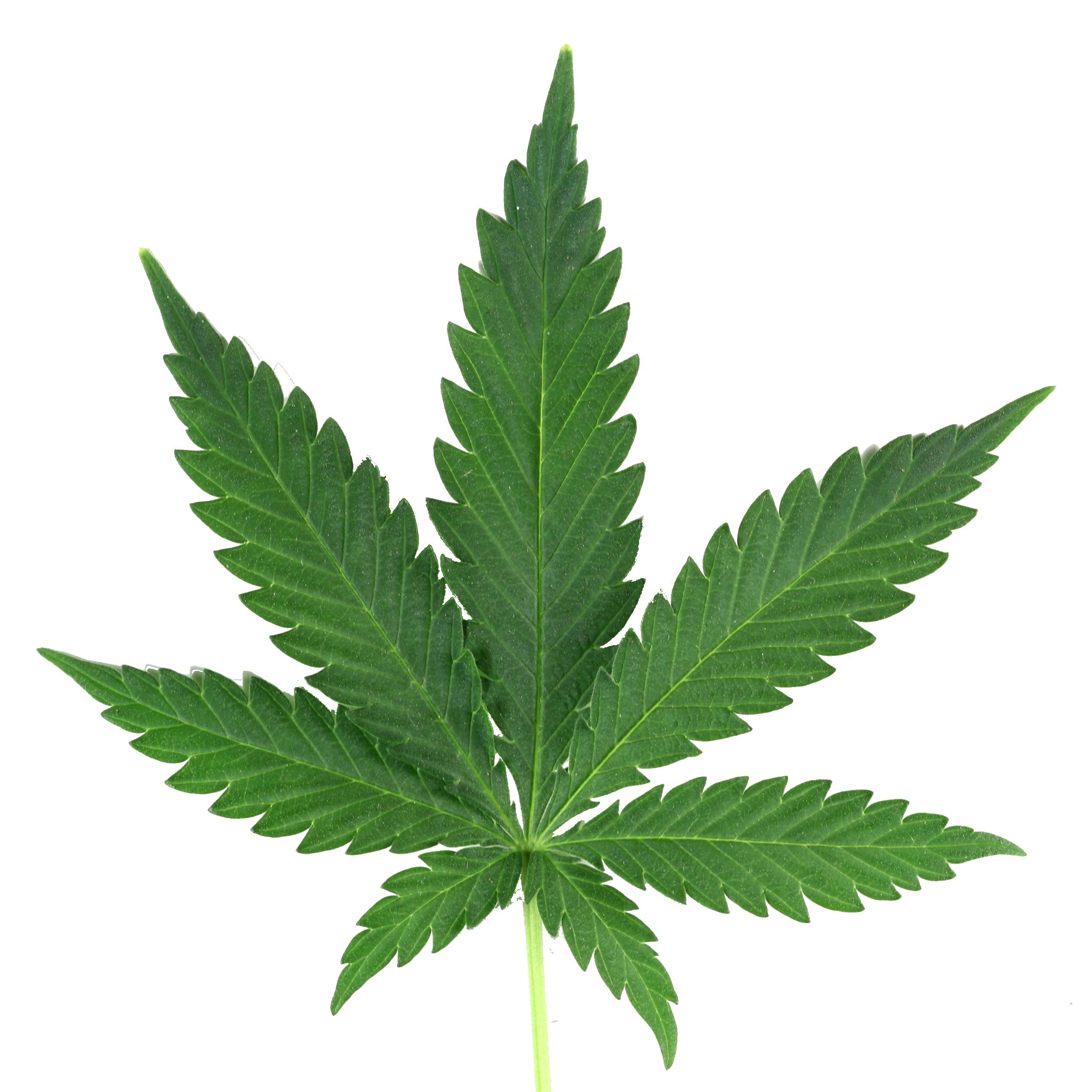 Weed PNG Image