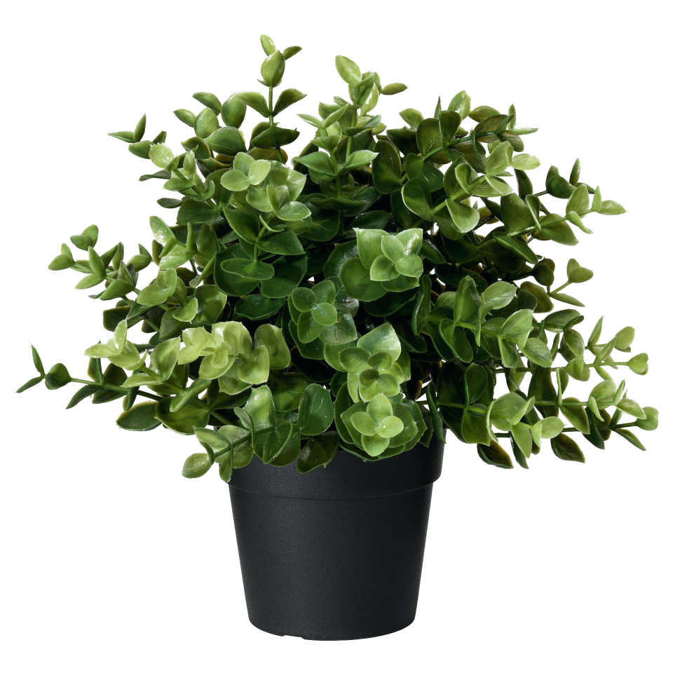Artificial Potted Plant Oregano PNG Image