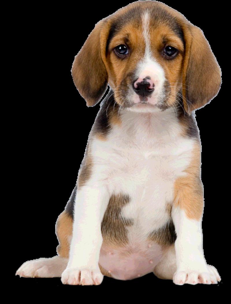 Cute dog PNG Image - PurePNG | Free transparent CC0 PNG ...