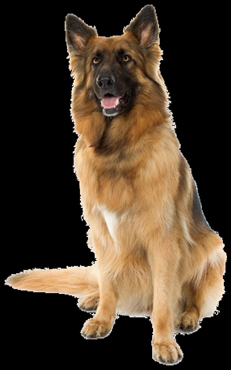 Large sitting Dog PNG Image