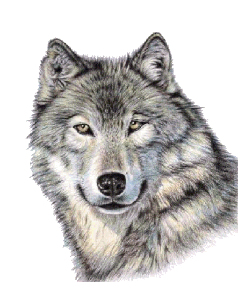 Cute Wolf Face PNG Image