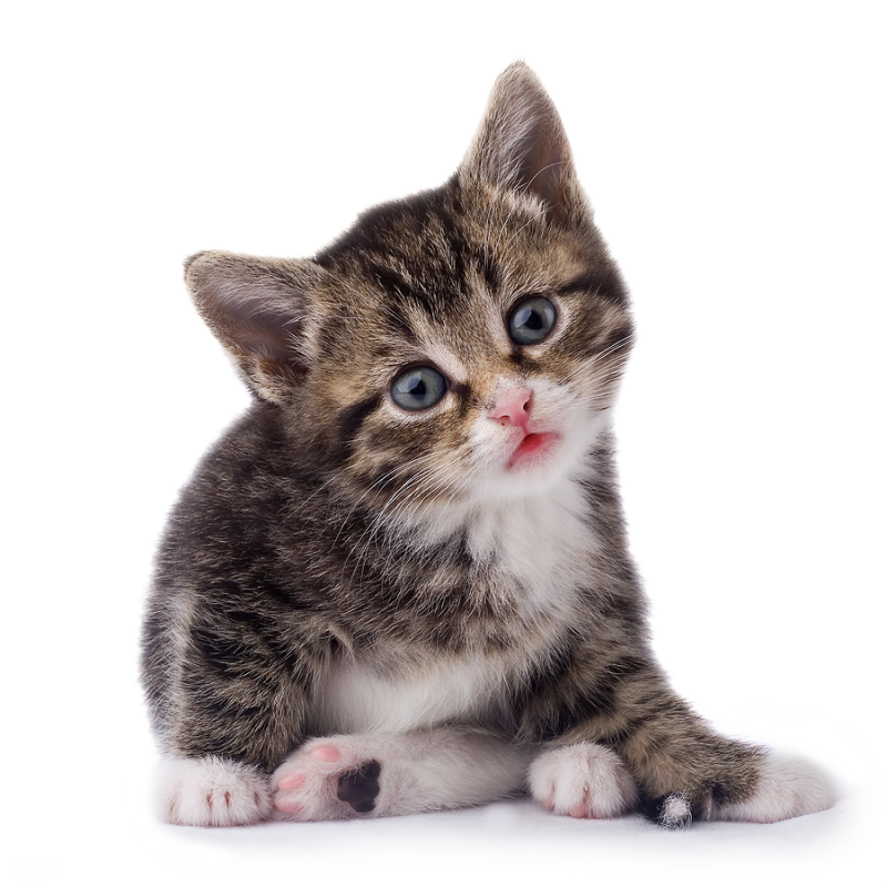 Black & White Cat PNG PNG Image