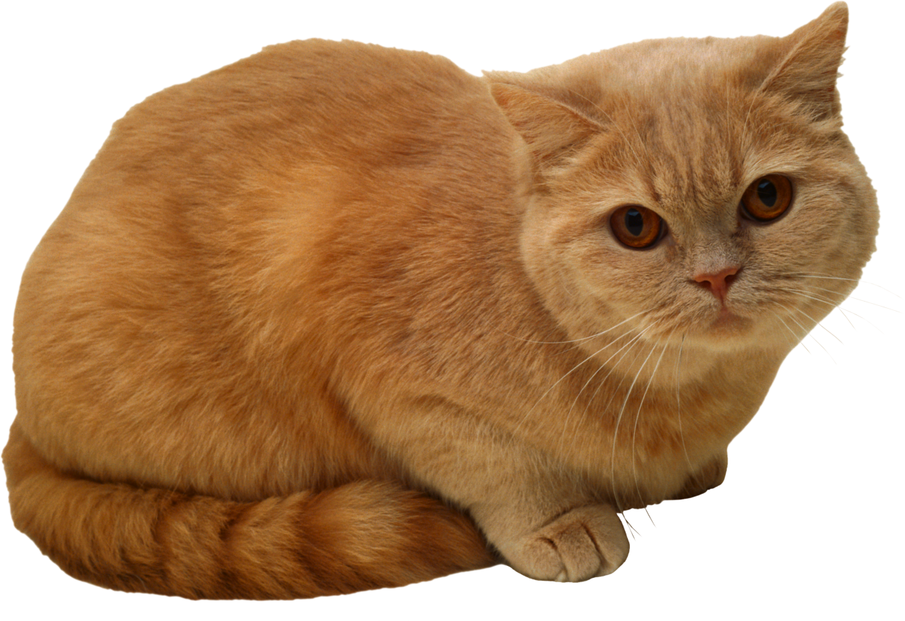 Sitting Cat PNG PNG Image