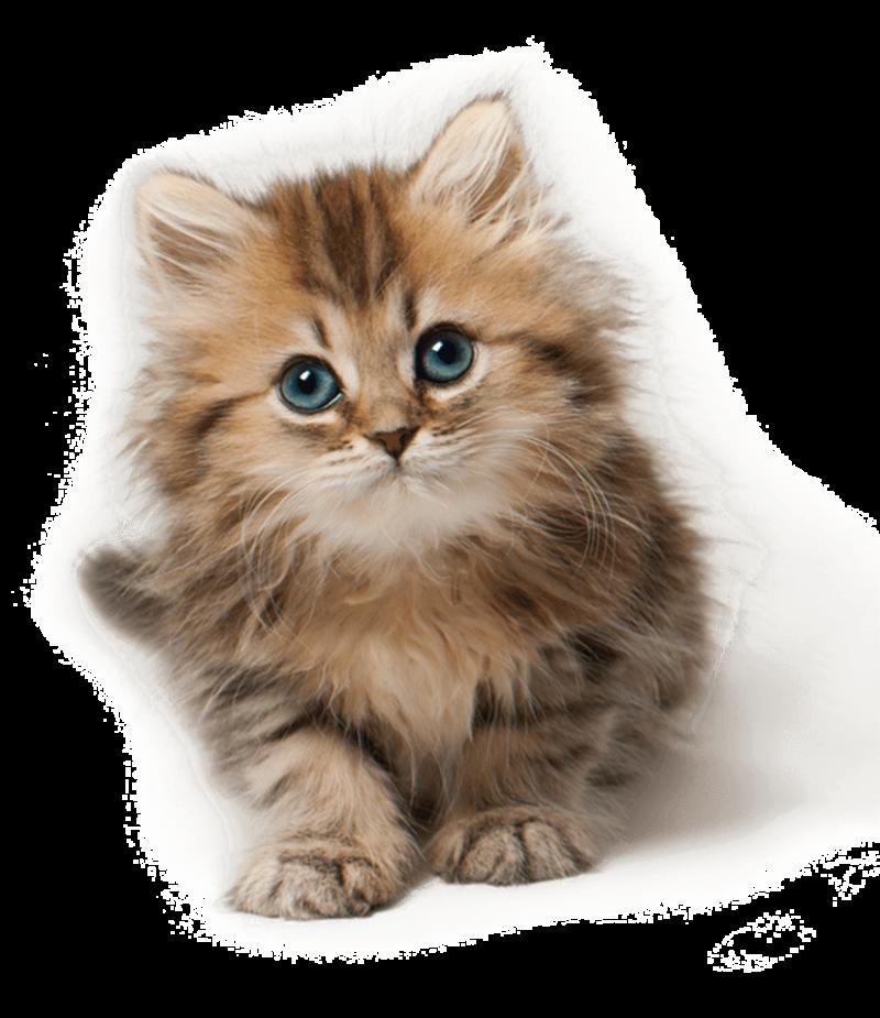 Cute Cat Kitten PNG PNG Image