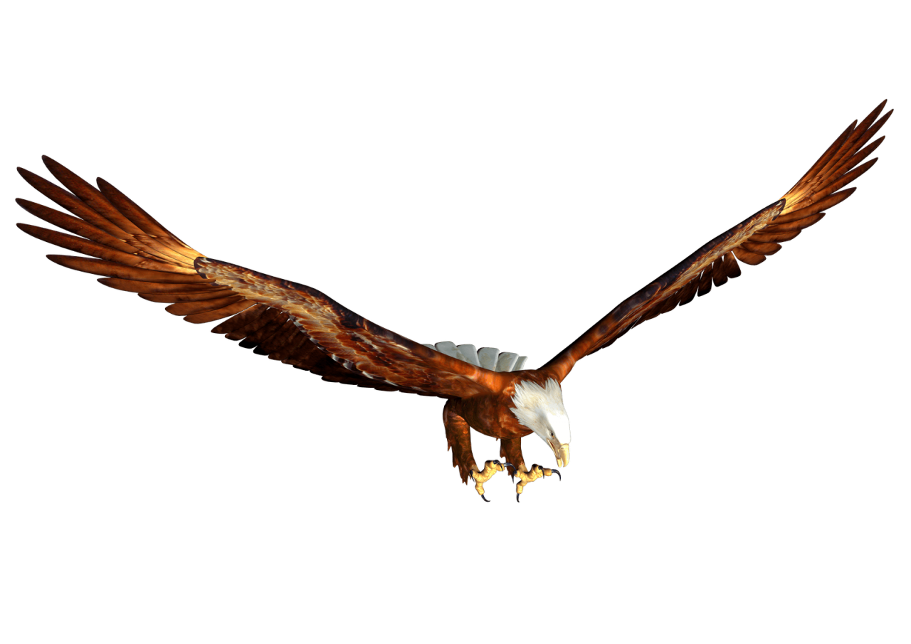 Animated bald eagle Hunting PNG Image