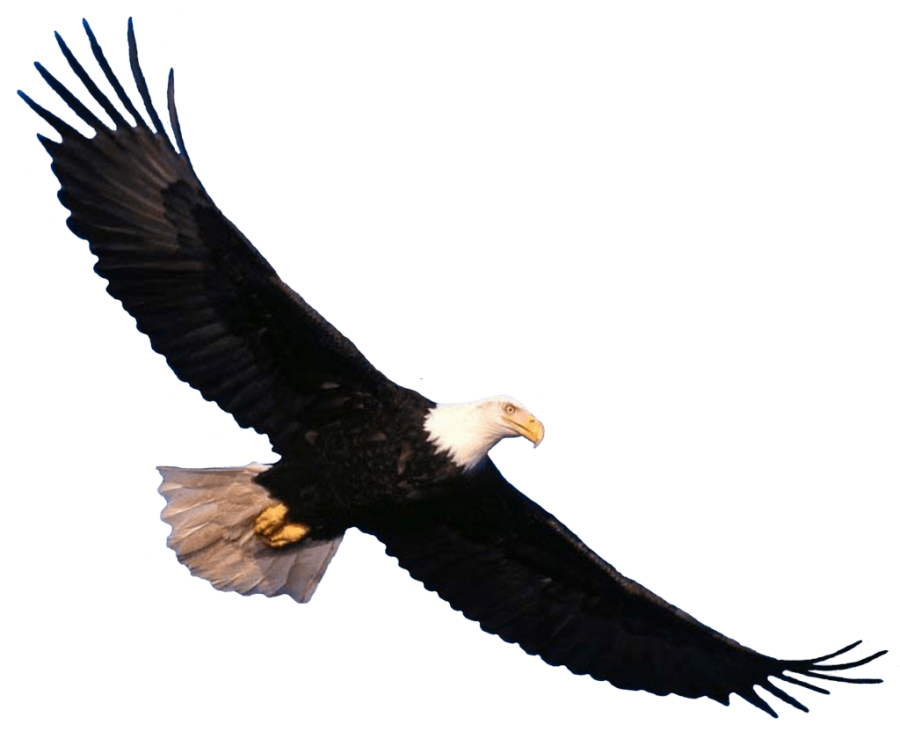 Bald Eagle flying PNG Image