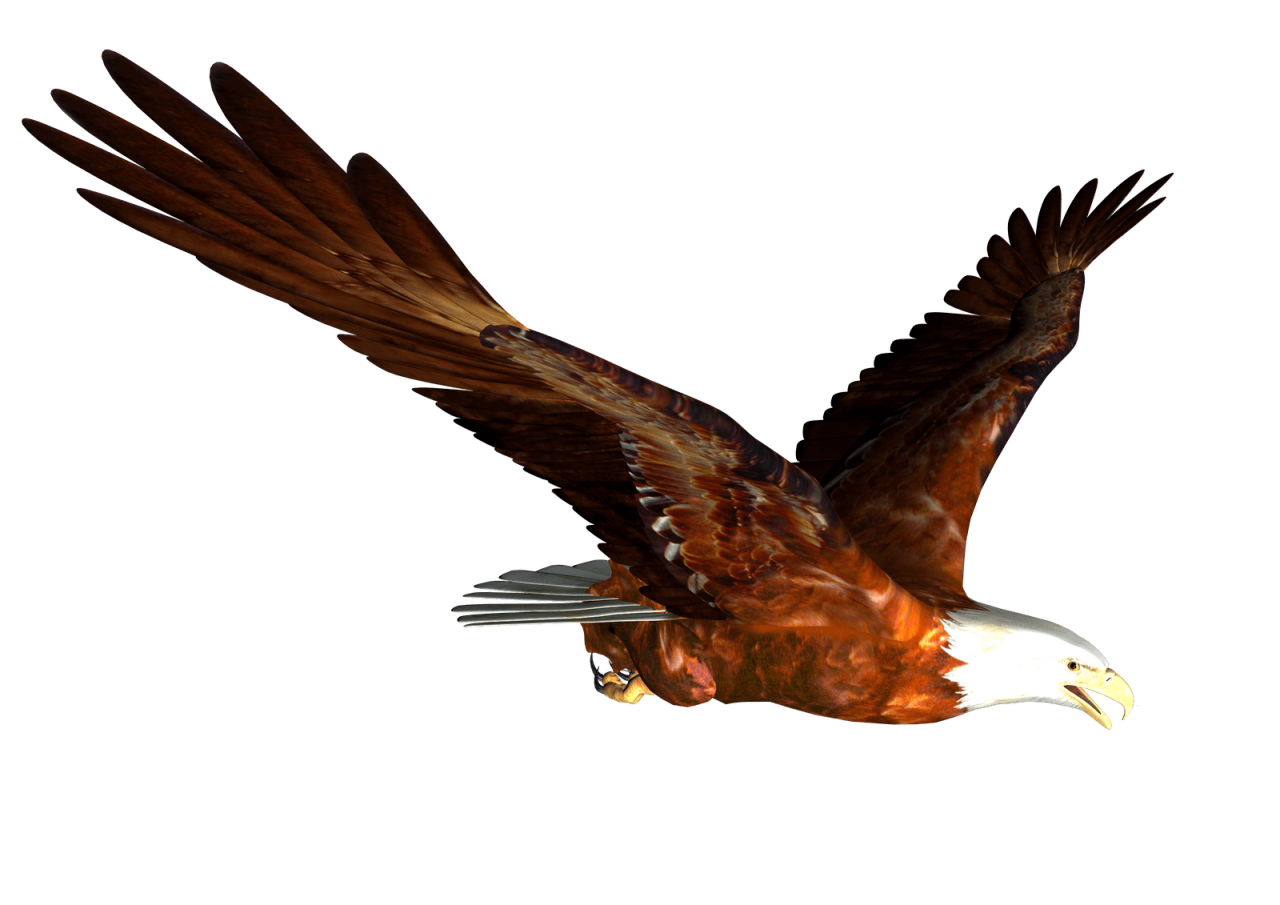 animated Bald eagle Flying PNG Image