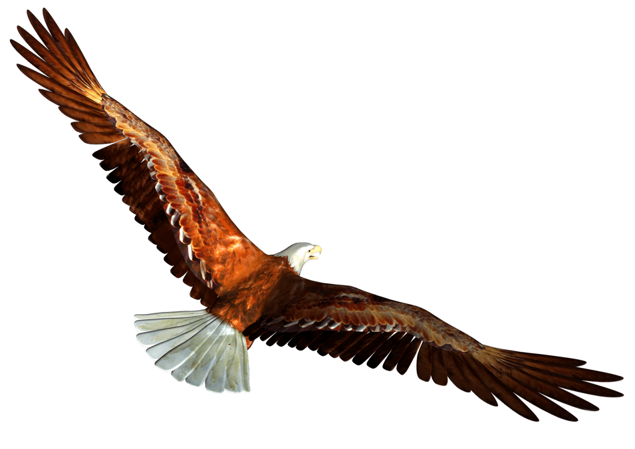 animated Bald eagle from behind PNG Image
