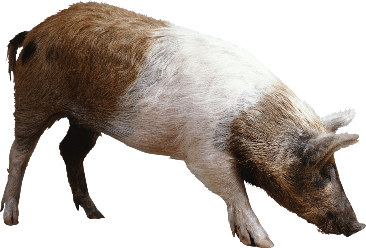 striped ping brown pig PNG Image