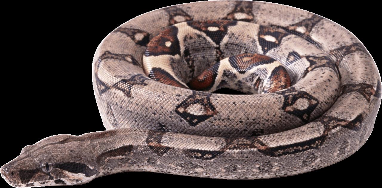 Curling Snake PNG Image