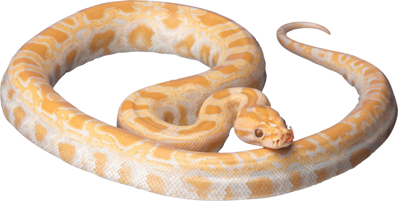 Yellow Snake PNG Image