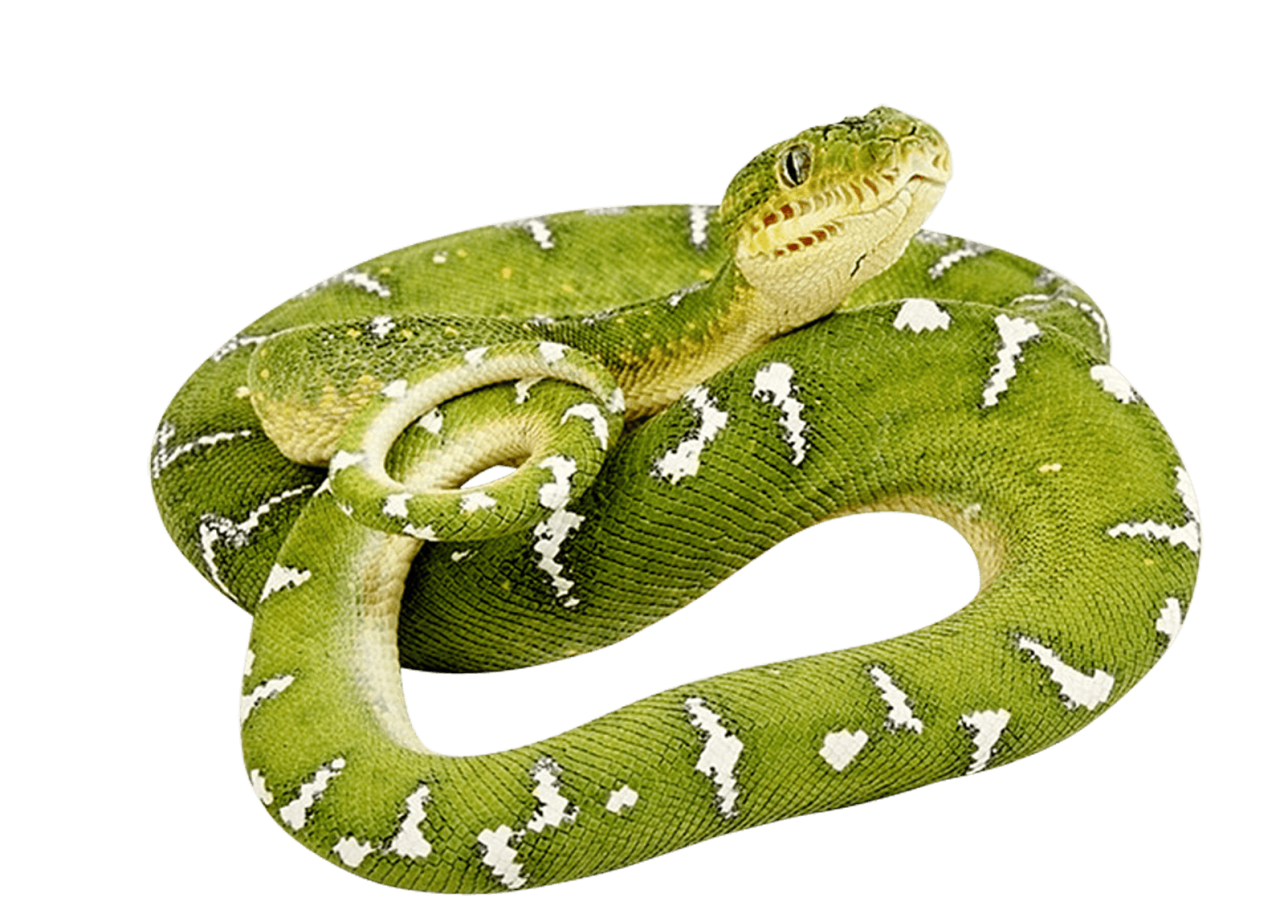 Green Snake twirling PNG Image