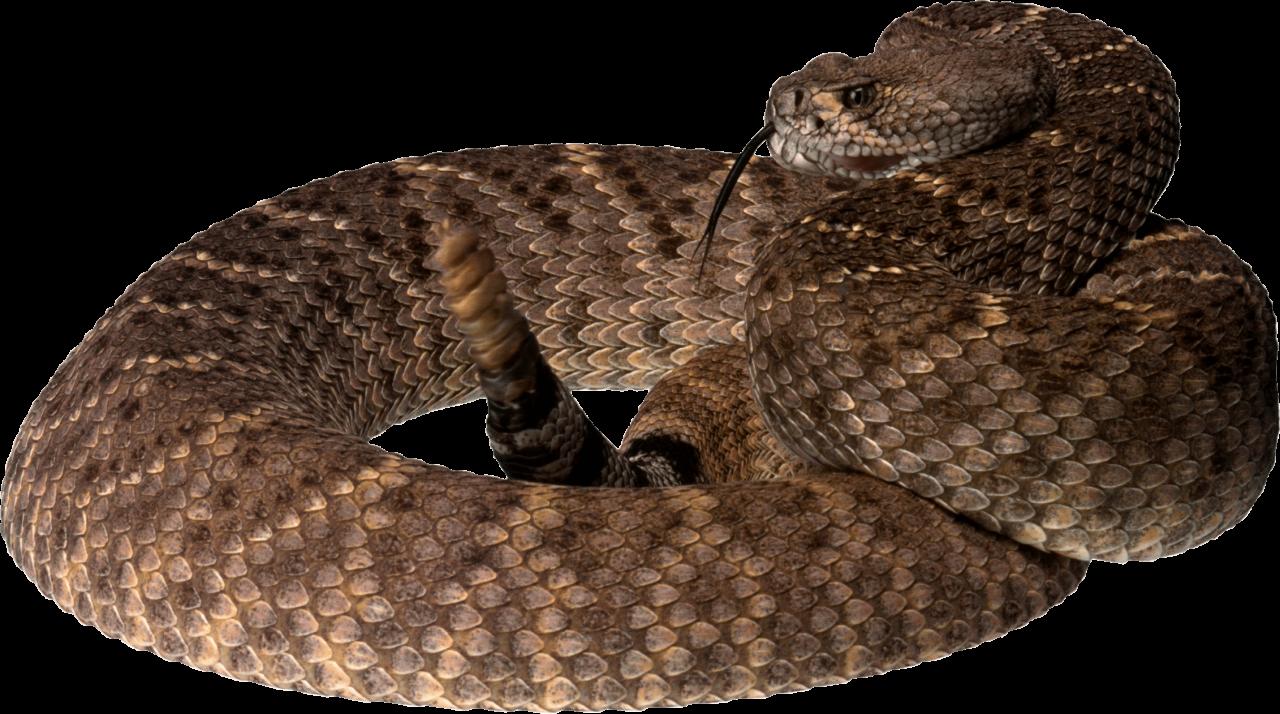 twirling Snake PNG Image