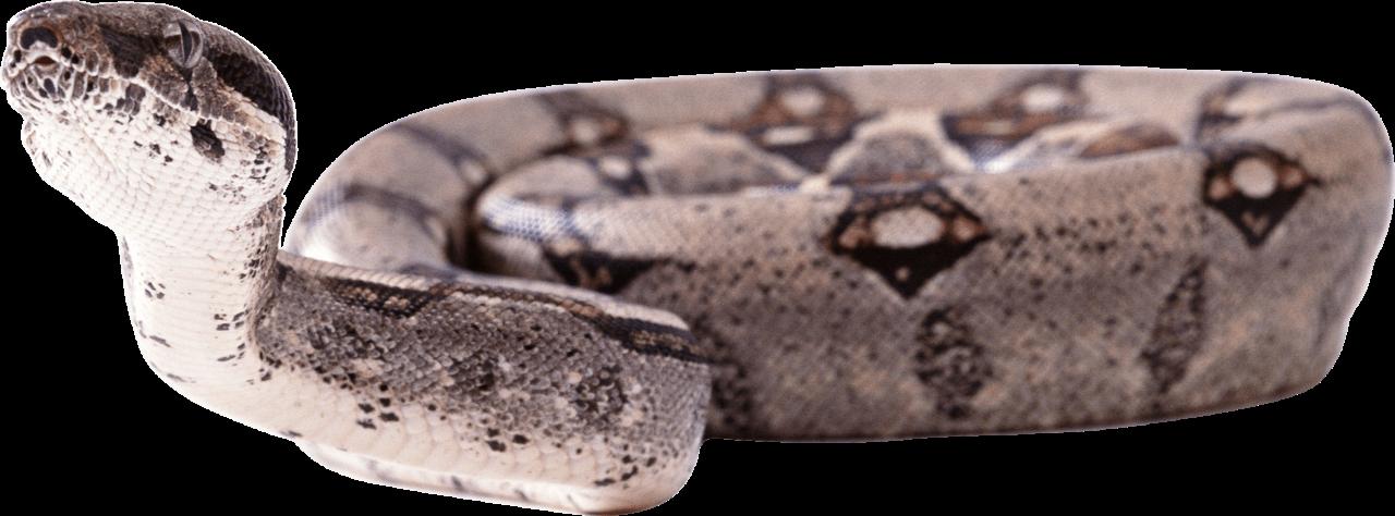 Snake twirling PNG Image