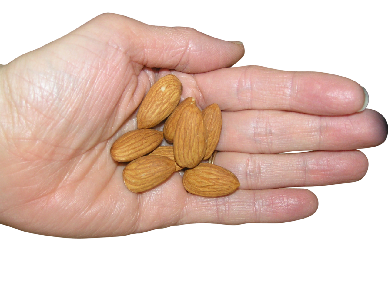 Almonds in Palm PNG Image