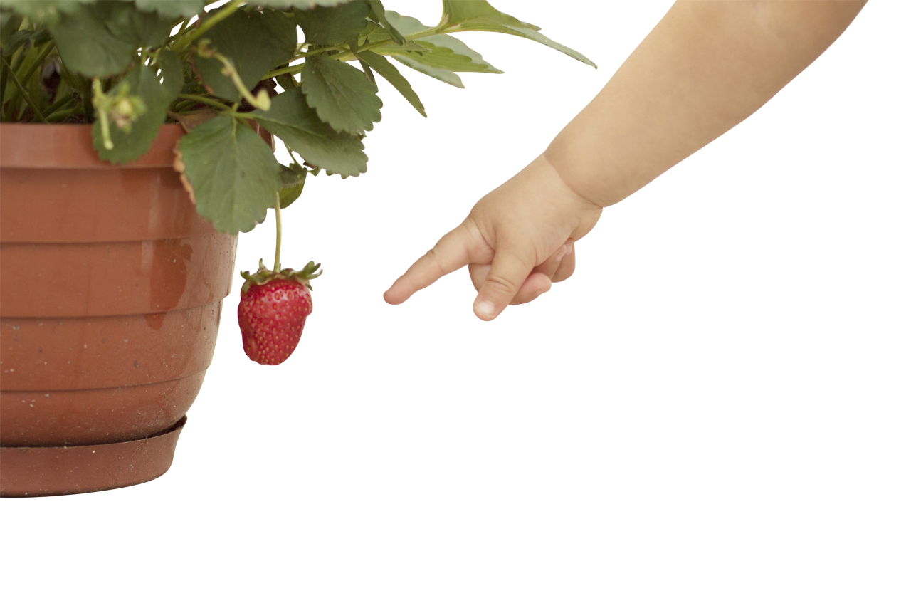 Baby hand Pointing at Strawberry PNG Image