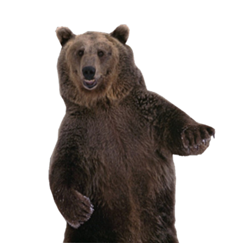 Brown Bear PNG Image