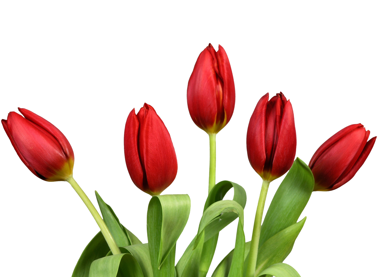 Flowers PNG Image
