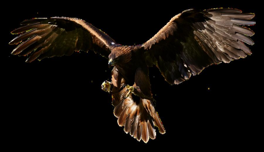 Flying eagle PNG Image