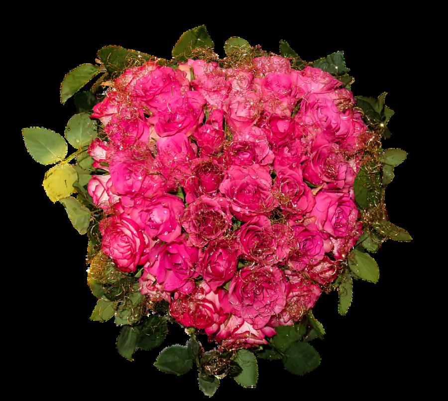 Fresh Roses PNG Image