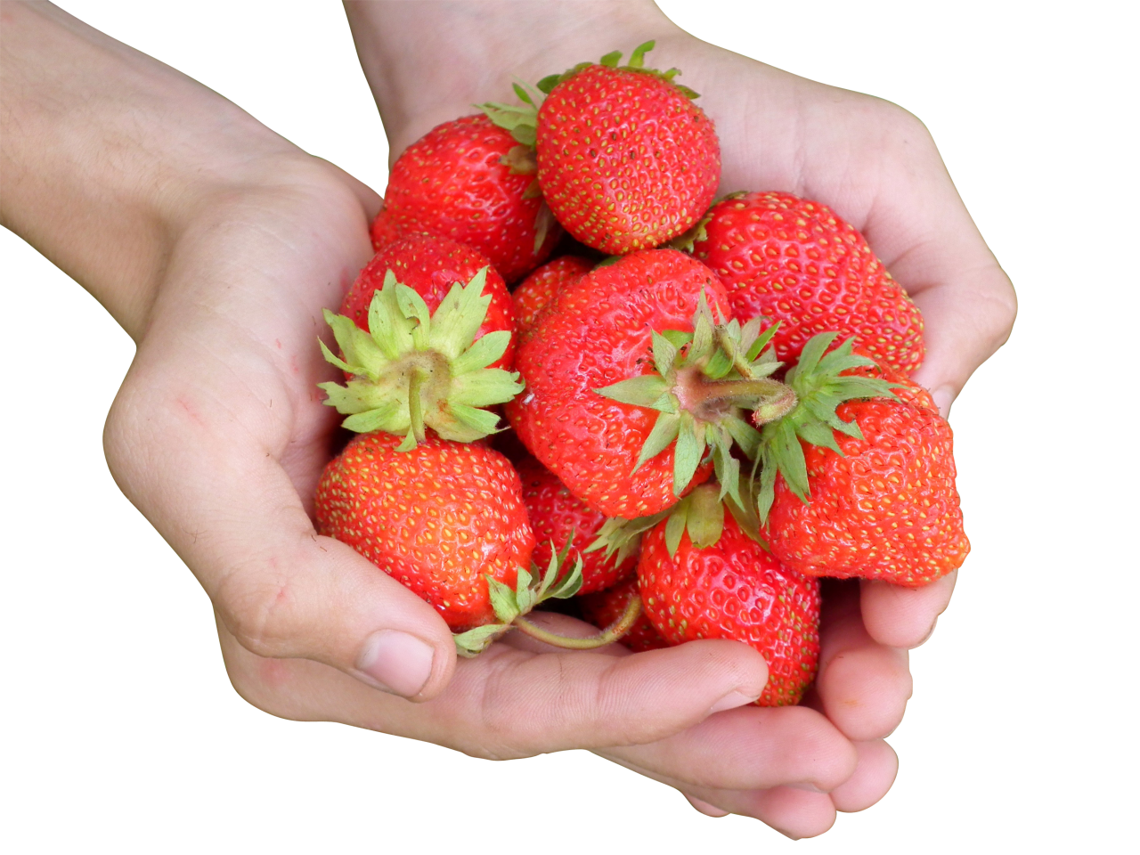 Hands holding a bunch of strawberries PNG Image