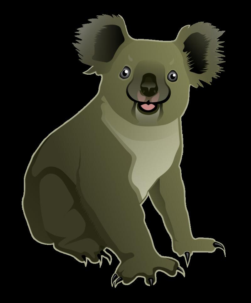 Koala Bear PNG Image