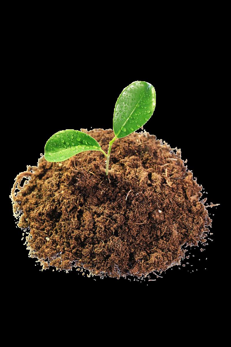 Leaves in Mud PNG Image